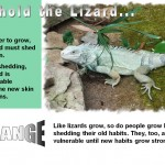 LizardsAndChange